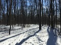 2016-01-31 13 20 10 A snow-covered trail in a snowy woodland eight days after the Blizzard of 2016 in the Franklin Farm section of Oak Hill, Fairfax County, Virginia.jpg