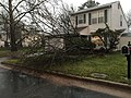 2016-02-24 17 39 45 Crabapple tree snapped by a severe thunderstorm on Tranquility Court in the Franklin Farm section of Oak Hill, Fairfax County, Virginia.jpg