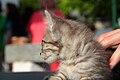 2016-06-25 Wikimania, Cat (freddy2001) (04).jpg