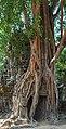2016 Angkor, Ta Som (29).jpg