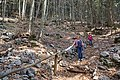 2017-04-10 04-14 Gardasee 057 Malcesine, Monte Baldo (33981257440).jpg