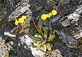 2017-04-10 04-14 Gardasee 200 Sirmione, Grotte di Catullo (33571926133).jpg