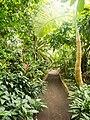 2018-06-18-bonn-meckenheimer-allee-169-botanischer-garten-regenwaldhaus-02.jpg