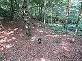 2018-07-27 Cottage woods, Northrepps (4).JPG