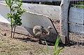2019-08-10. Зоопарк в Придорожном 100.jpg