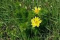 20190511 Miłki wiosenne w rezerwacie przyrody Skorocice - 1017 2464 DxO.jpg