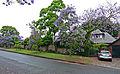 26 Springdale Road, Killara, New South Wales (2010-12-04) 02.jpg