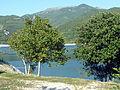 2 Lago di Turano.jpg