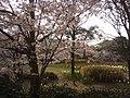 3 Chome-1 Meikeminami, Chūō-ku, Niigata-shi, Niigata-ken 950-0948, Japan - panoramio (1).jpg