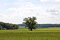 3 Eichen Kuhwasen 03.jpg