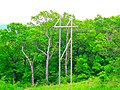 ATC Power Line - panoramio (55).jpg