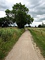 A Footpath west of Hook - geograph.org.uk - 1391364.jpg