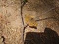 A butterfly.jpg