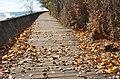 A nice boardwalk runs all round the island, along Lake Ontario (27287330444).jpg