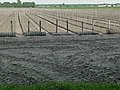 A view over prepared agriculture fields in Drenthe, North-Netherlands, in spring of 2012.jpg