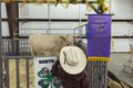 A visitor checks out the grand champion steer at the Zapata County Fair in Zapata, Texas LCCN2014631856.tif