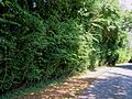 Access road to Hatfield Park Essex England 1.jpg