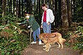 Accessible Trail Hikers, Gifford Pinchot National Forest (36169806742).jpg
