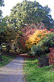 Acer Valley @ Hillier Gardens (4022242749).jpg
