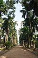Acharya Jagadish Chandra Bose Indian Botanic Garden - Howrah 2011-01-08 9783.JPG