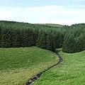 Afon Doethie Fawr leaves the Berwyn Plantation, Ceredigion - geograph.org.uk - 518255.jpg