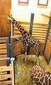 African Savannah house, Zoo Jihlava, stable.jpg
