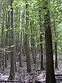 Agfalva-Wald 01.JPG