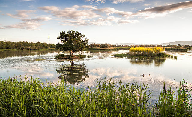 Thirteenth prize: Pool of Cortalet, Aiguamolls de l'Empordà, Natural Park, Catalonia, Spain | by Mikipons