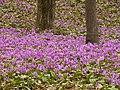 Akita - panoramio.jpg