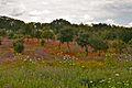 Alentejo Countryside (10250649065).jpg