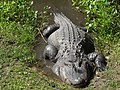 Alligator at the Central Florida Zoo in Sanford, Florida.jpg