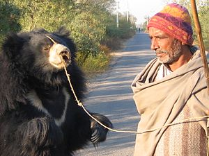 Wildlife SOS - A dancing bear and its Kalandar Master