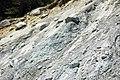 Alpine glacial till (Pleistocene; near Dana Fork, Yosemite National Park, California, USA) 6.jpg