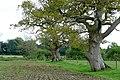 An ancient field boundary - geograph.org.uk - 1525931.jpg