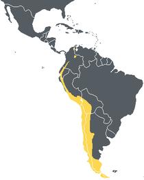 תחום התפוצה של קונדור האנדים בצהוב