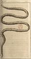 Andry - De la génération des vers (1741), planche p. 190.png
