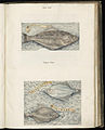 Animal drawings collected by Felix Platter, p1 - (122).jpg
