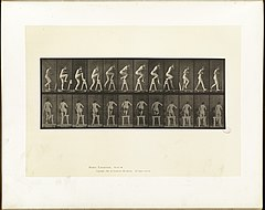 Animal locomotion. Plate 178 (Boston Public Library).jpg
