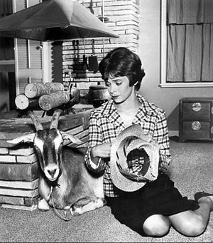 "Angel (1960 TV series) - Angel Smith with her ""Goat Dog"", a  wedding gift from Uncle Jacques (1961)"