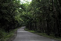 Anshi National Park drive.jpg