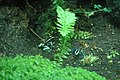 Aquarium (4476738365).jpg