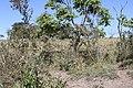 Araguainha - State of Mato Grosso, Brazil - panoramio (1053).jpg