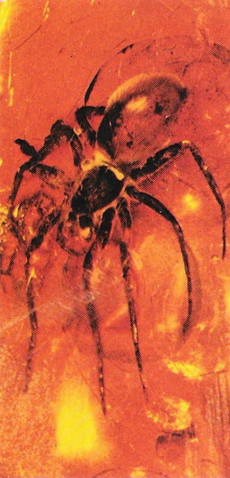 Aranya fosilitzada a l'ambre