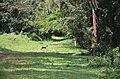 Arboretum of Ruhande in Rwanda.jpg