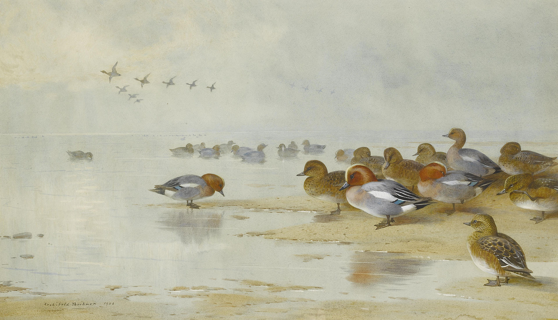 Archibald Thorburn Wigeon and Teal by the water's edge 1906.jpg