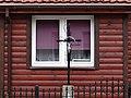 Architectural Detail - Tykocin - Poland - 03 (36155944331).jpg