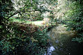 Arun at the north of Nuthurst, West Sussex, England 04.jpg