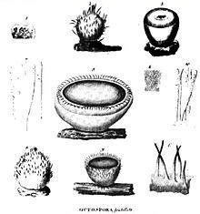 Ten numbered black and white sketches of various structures, including: cup-shaped objects, some with hairs, some with open tops and some closed; lines resembling thin filaments