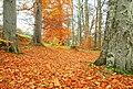 Autumn at Huntly Wood near Banbridge (5) - geograph.org.uk - 1046311.jpg