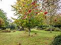 Autumn berries (10493430534).jpg